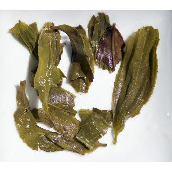 Herbata Zielona Tarlton po zaparzeniu