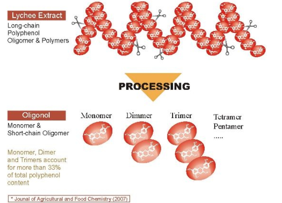 Przetwarzanie Proantocyjanidyn Oligonol